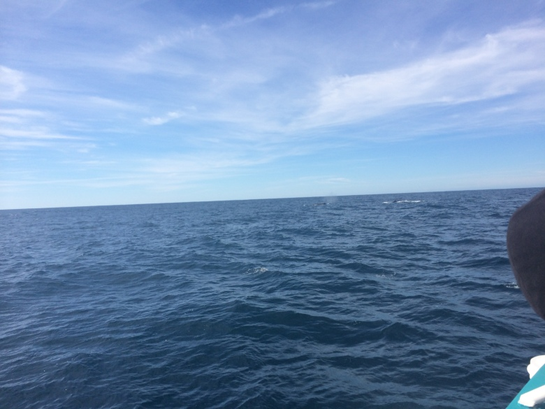 You can sort of see a whale here!